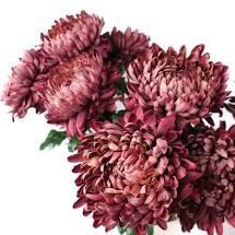 Chrysanthemums as a funeral flower